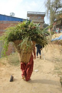 Explore Nepal 2015 (10)