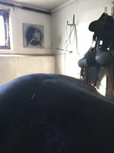 Akupunktur på hest